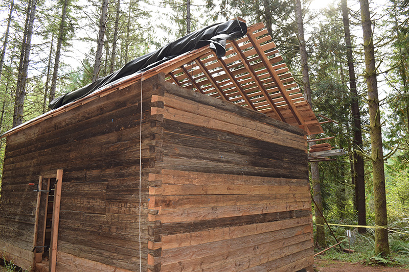 Molalla Log House roof partway complete for the restoration project at Hopkins Demonstration Forest