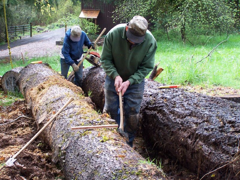 Two people cutting up two large trees