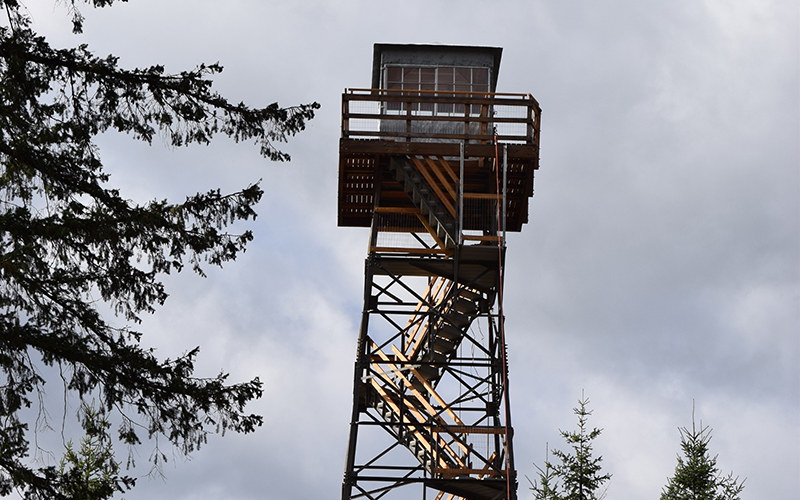 Fire lookout tower above tall evergreen trees