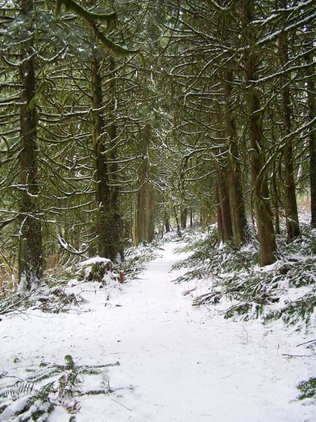 Snowy path into the forest