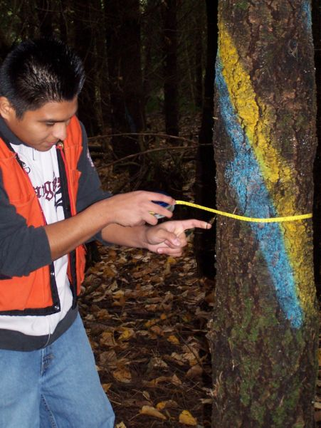 Student working on a tree